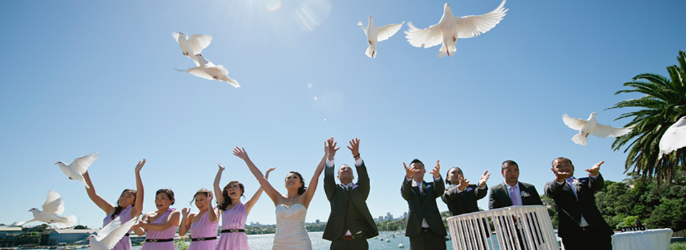 bruidsduiven2